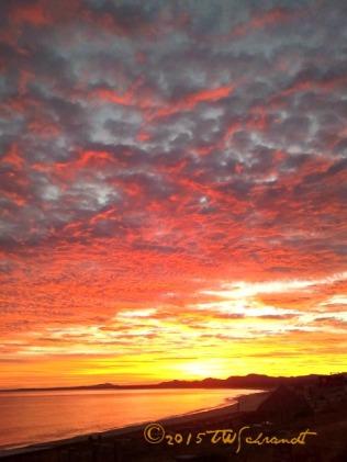 Saffron-Sunrise