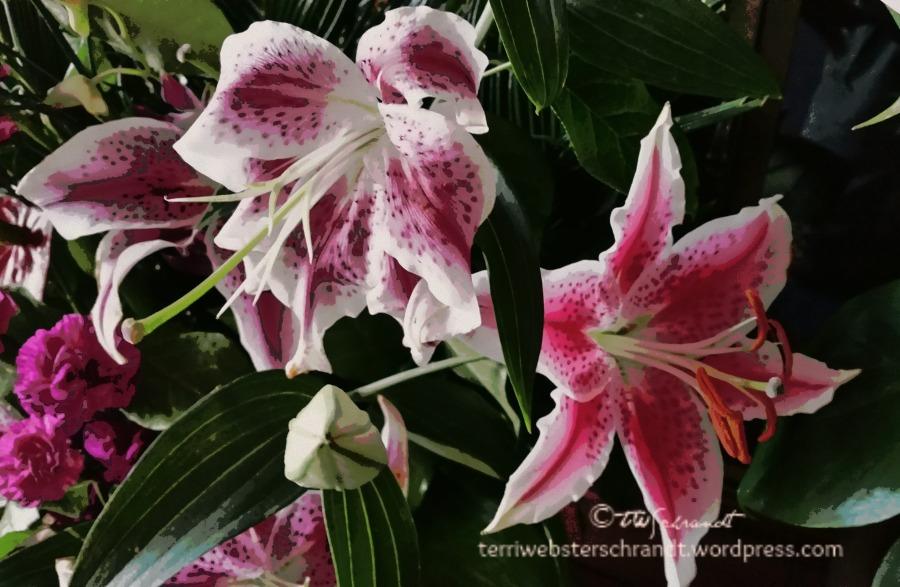 Mauve Lilies