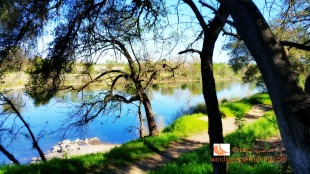 Close to the bike trail are jogging paths and trails along the American River