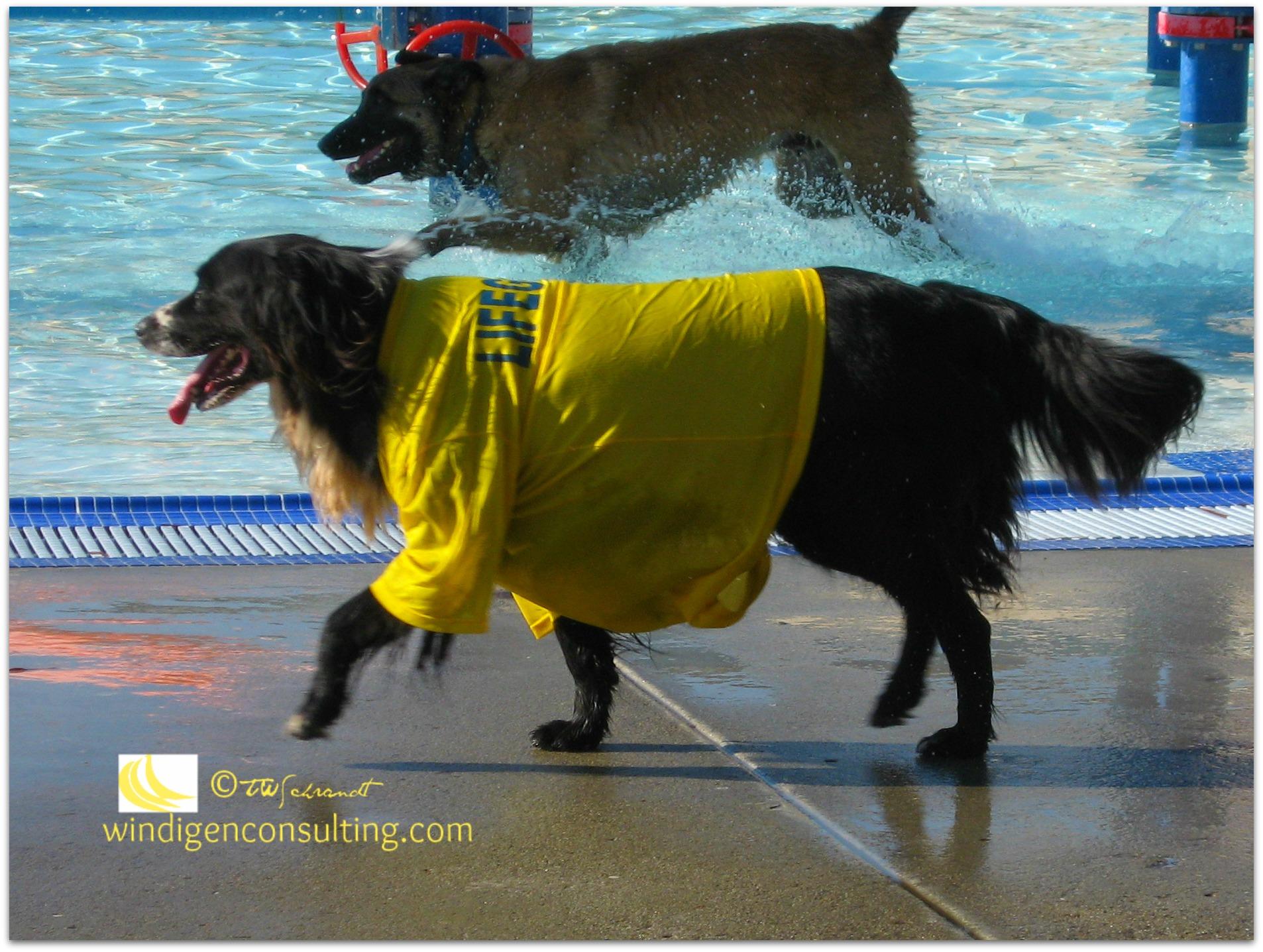 Oreo-the-Lifeguard