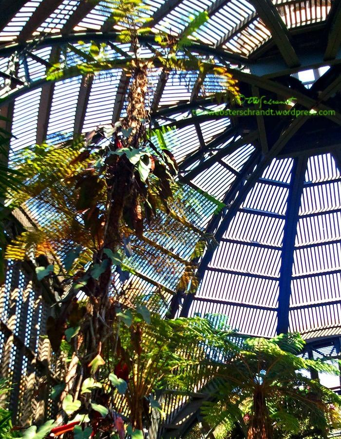 Intricate-Arboretum