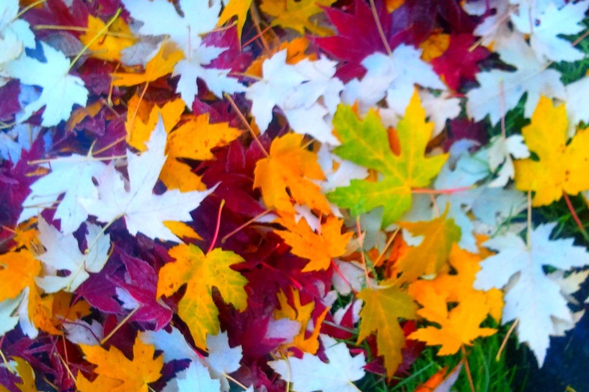 Intricate-Leaf-Carpet