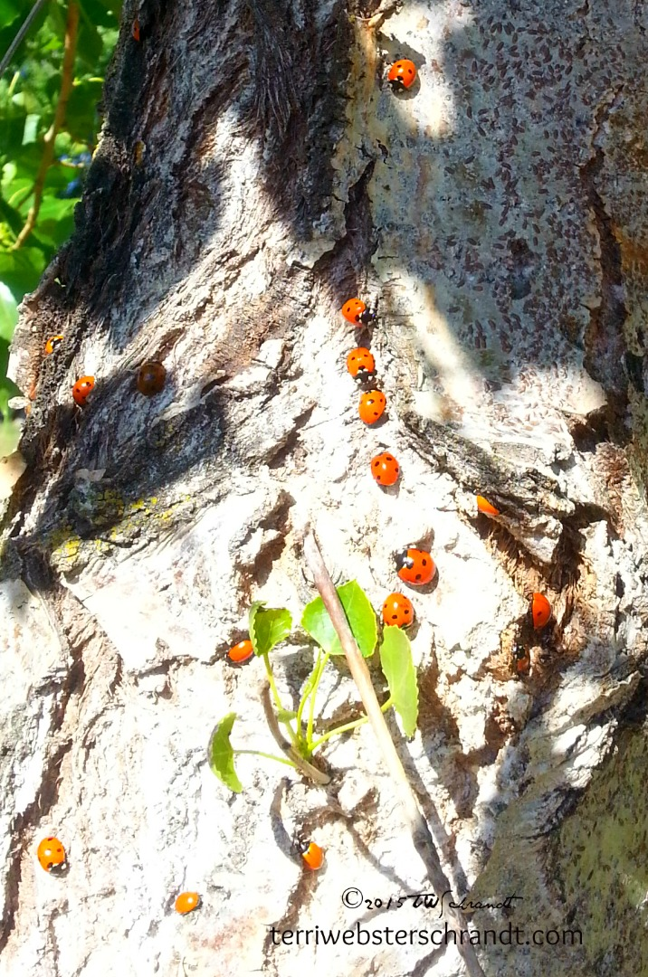 Lady-Bugs-Life
