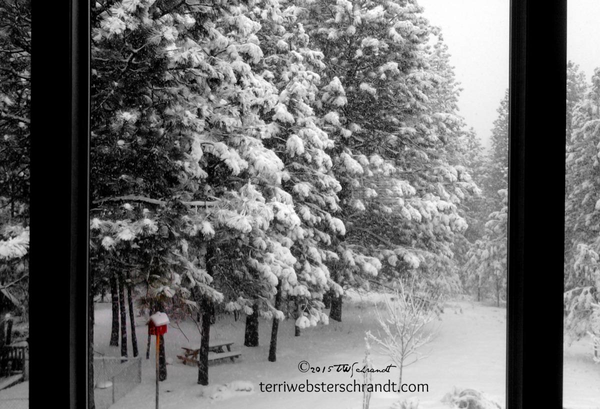 Snow-Envelops-Backyard