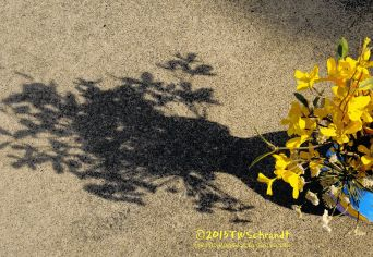 Vase-and-Yellow-Flowers-Shadow