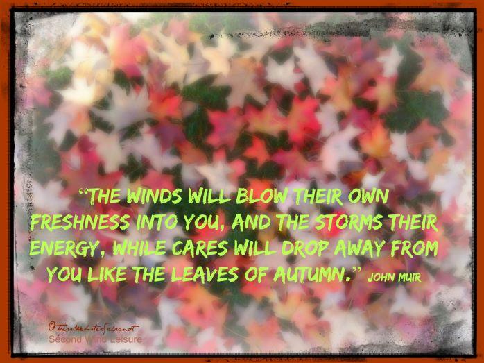 John-Muir-quote