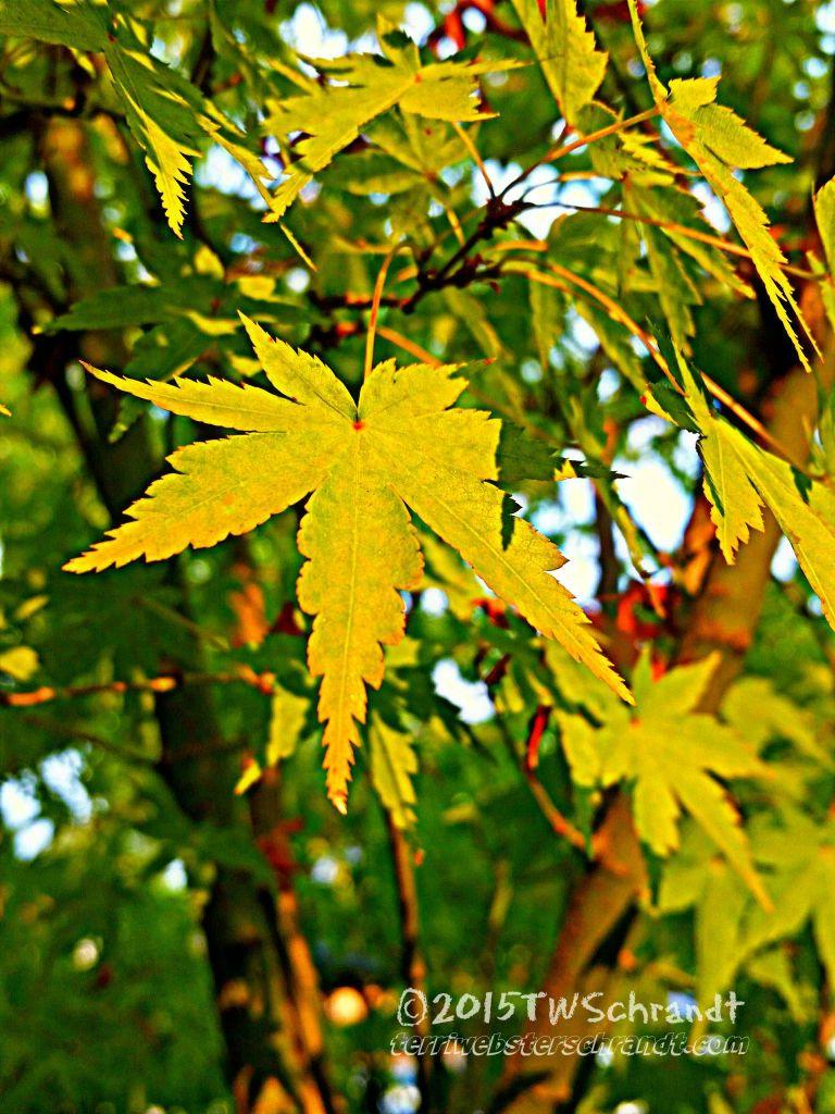 End-of-summer-Leaves