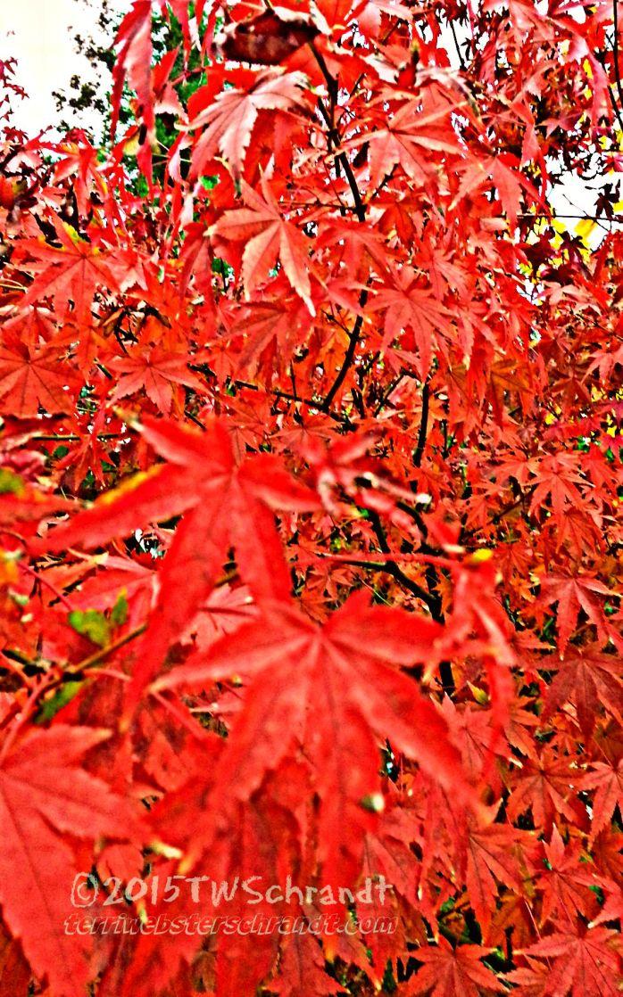 Monochrome-Autumn-Leaves