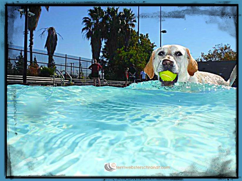 Swim-for-Joy