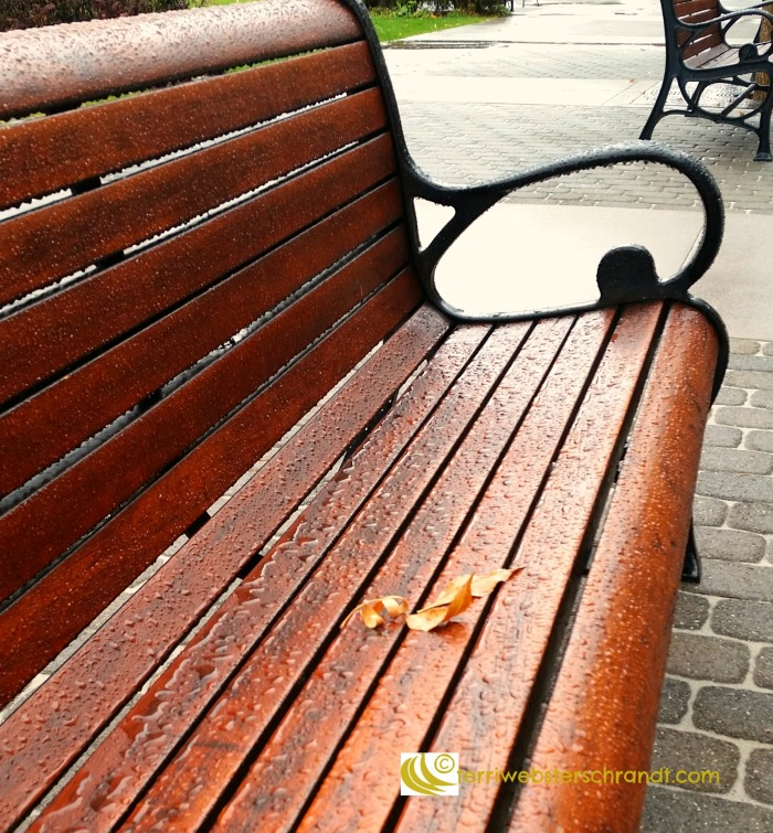Leaf on a bench