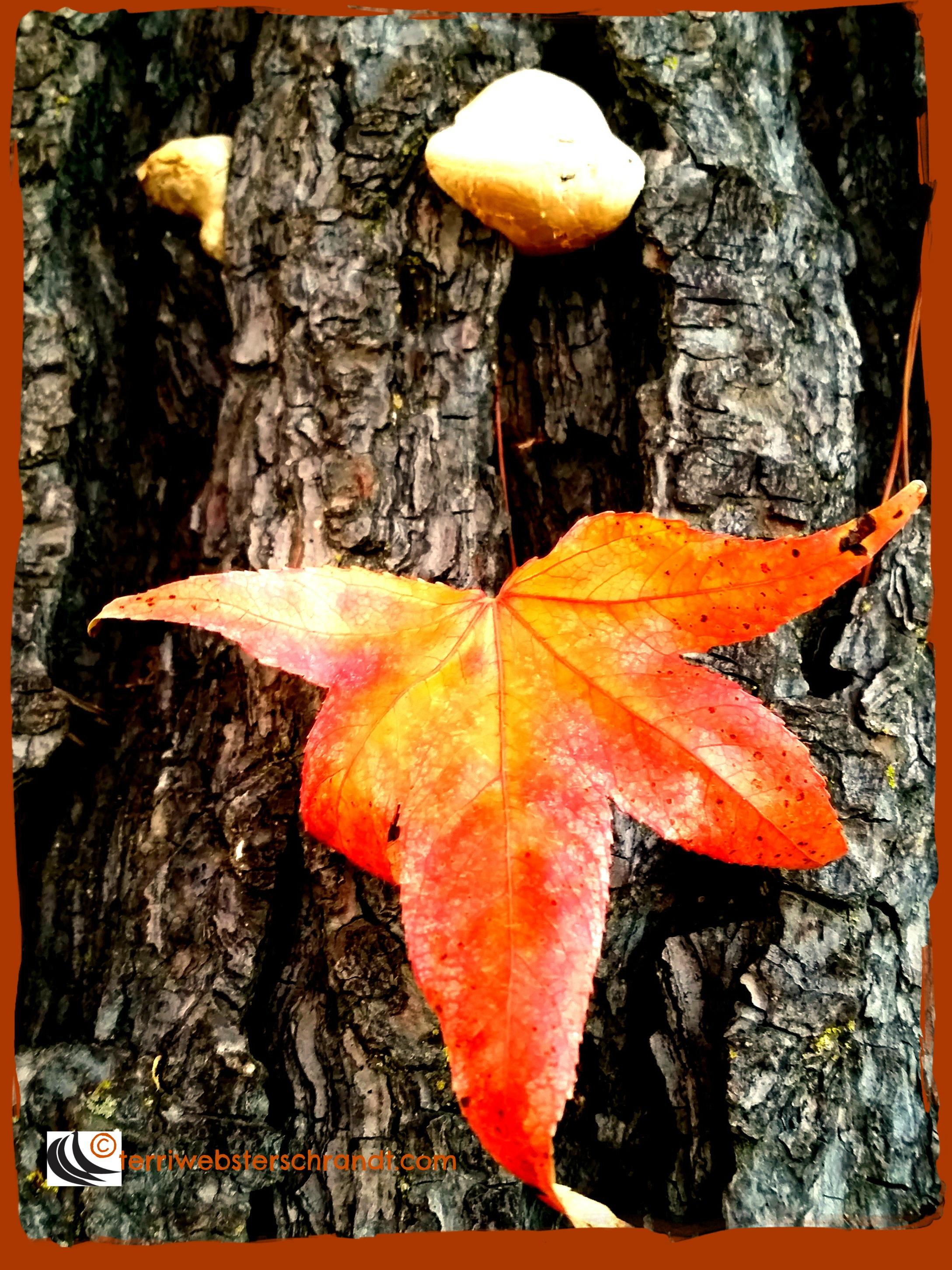 Autumn leaf on wood shows it's splendor
