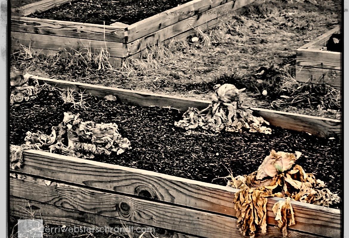 Zombie Plants