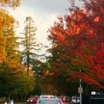 Autumn splendor on campus