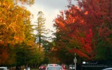 Autumn splendor on campus