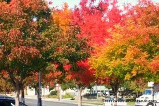 The trees are crazy with color!