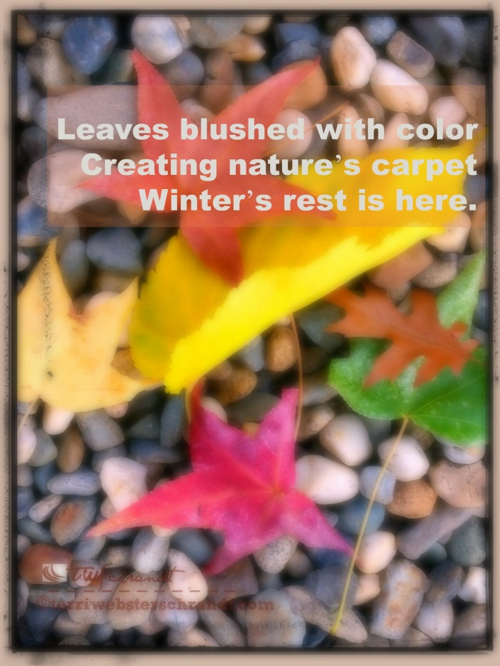 Leaves create nature's carpet