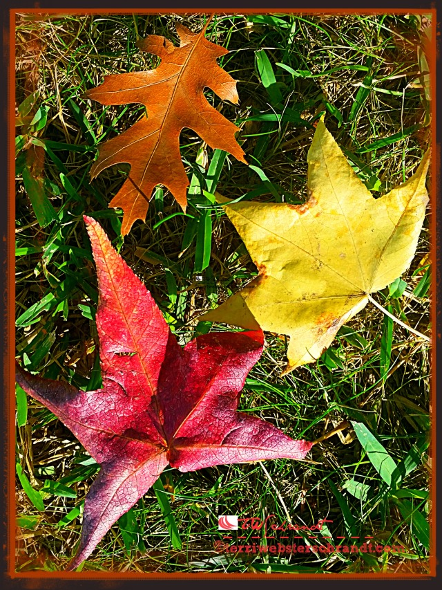 autumn leaf trio
