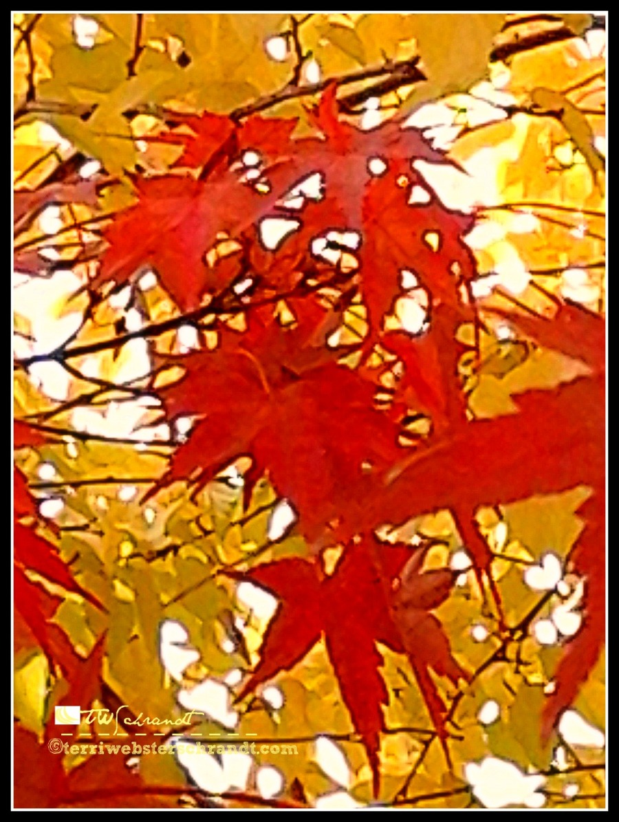 orange maple leaves against the yellow mulberry tree