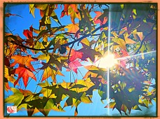 Autumn sun bursts through colorful maple leaves