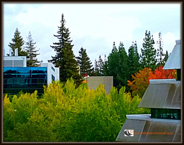 Roof Top View as seen from Sacramento State University