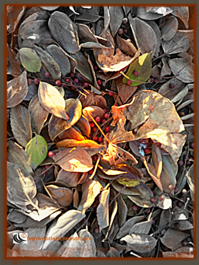 fallen leaves are nature's carpet