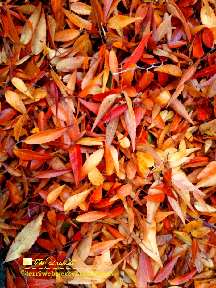 Autumn leaves are creation's carpet