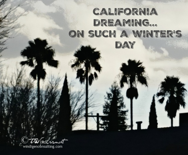 California palm trees weather the winter storm.