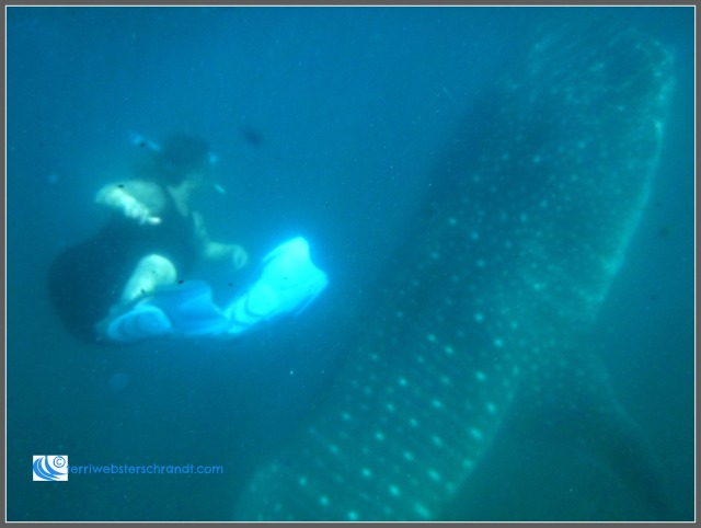 Whale shark was a few feet away from me. A good 20-footer.