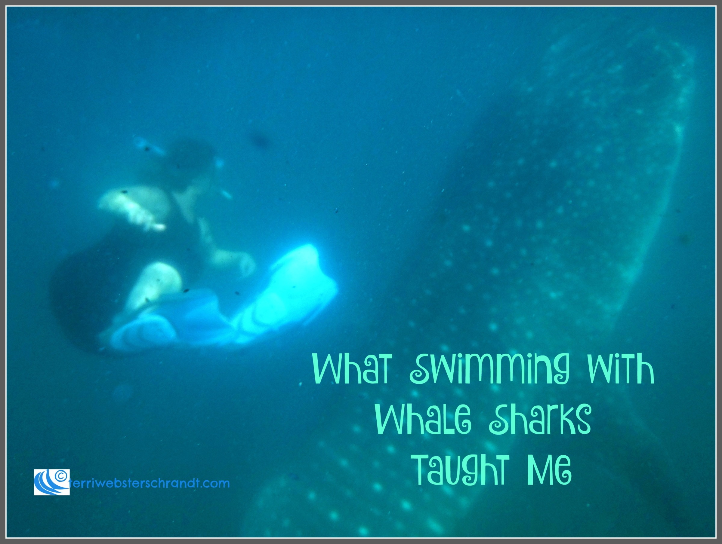 What swimming with whale sharks taught me