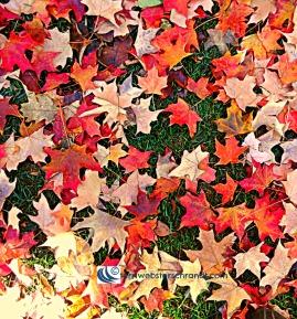 Autumn Leaves beneath my feet