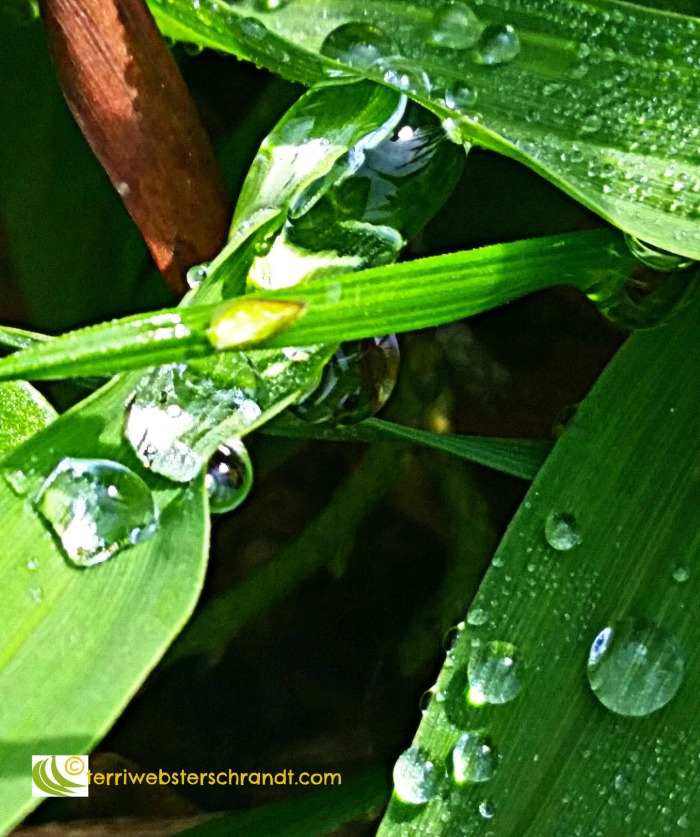 variation of drops on blades of grass