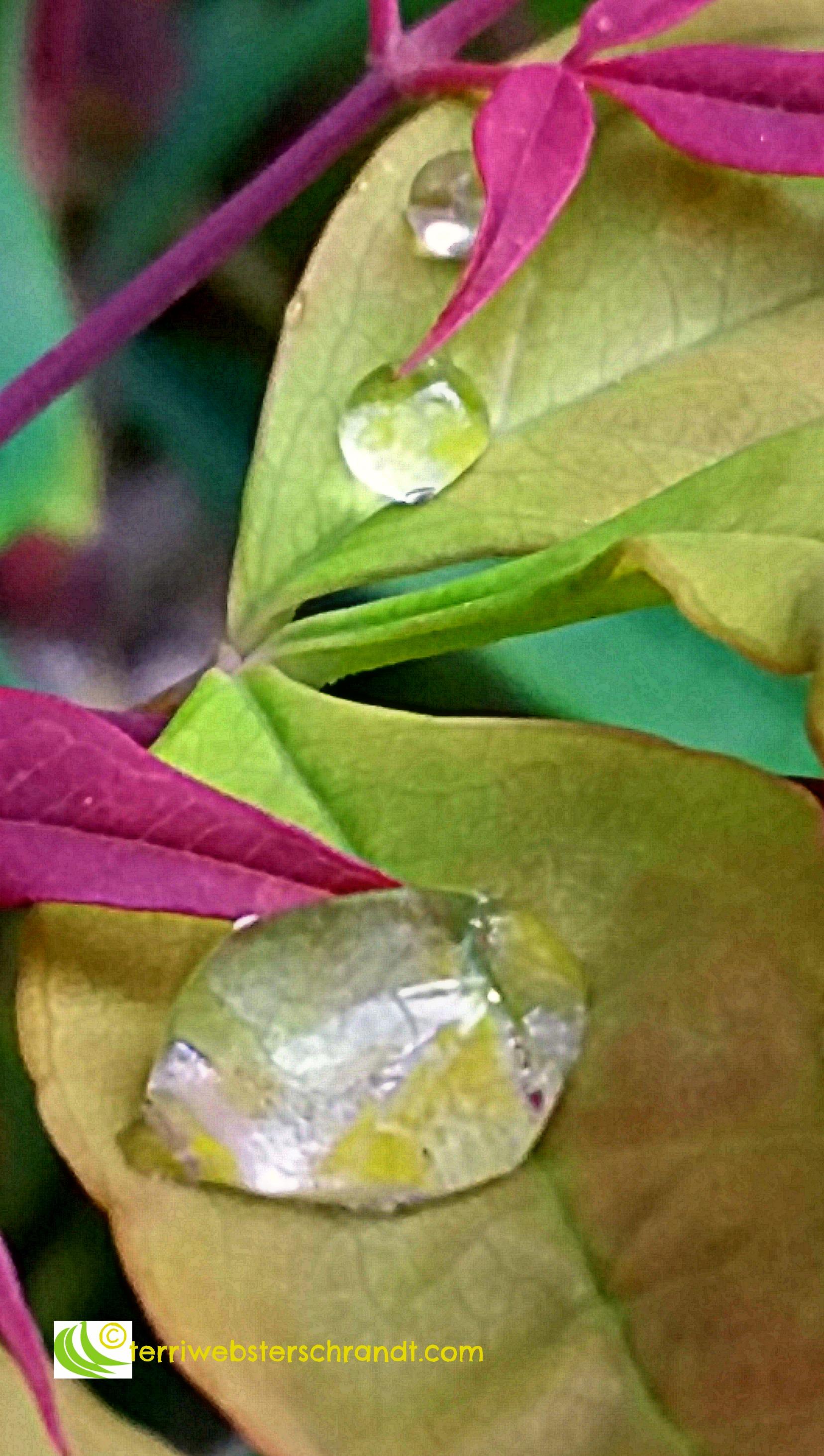 Rain drops dance on a spring leaf