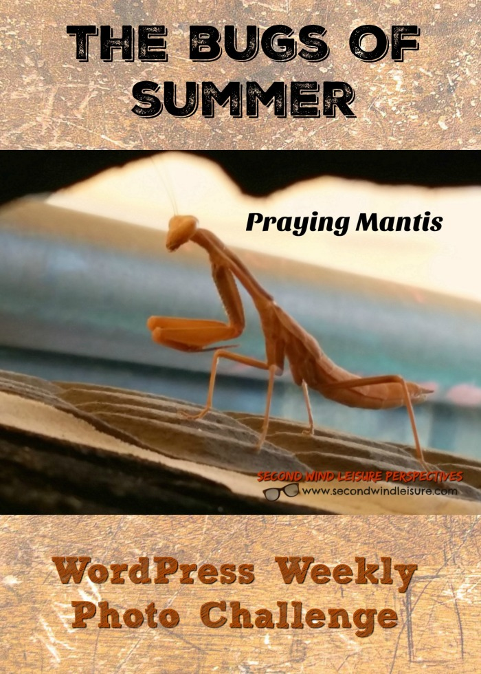The Bugs of Summer WordPress Weekly Photo Challenge