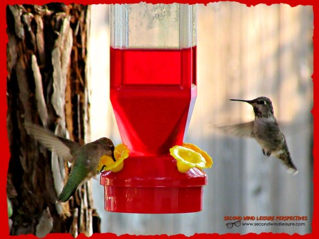 Hummingbirds on a quest for food