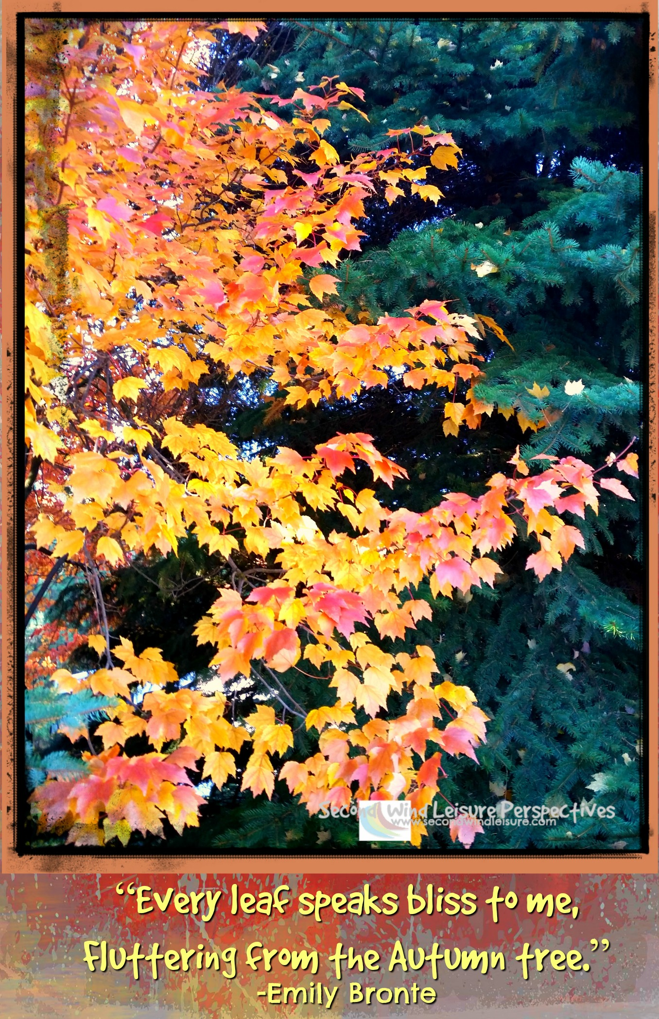 """""""Every leaf speaks bliss to me, Fluttering from the Autumn tree."""" -Emily Bronte"""