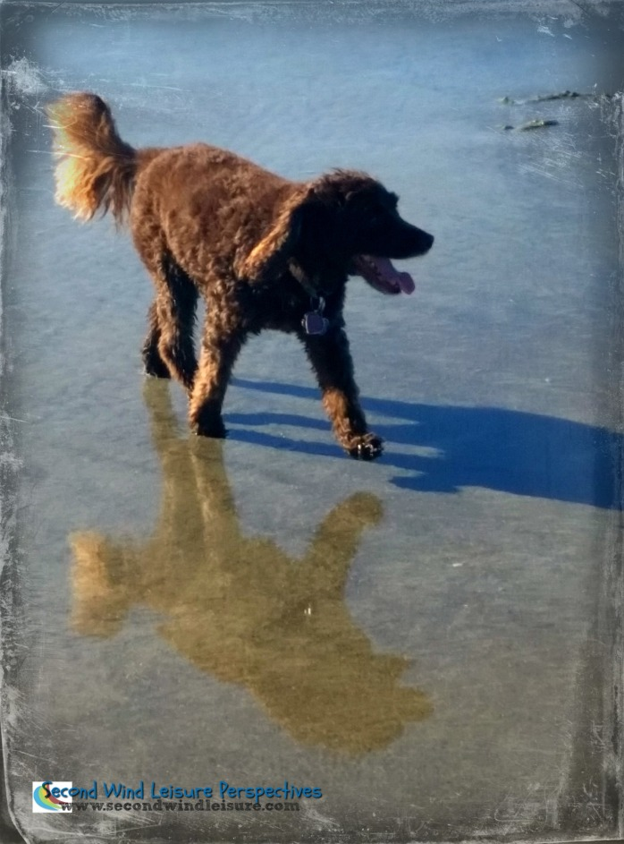 Aero cavorts on dog beach accompanied by his shadow and reflection