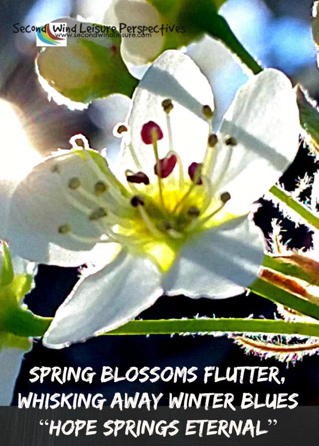 My Haiku: Spring blossoms flutter, whisking away winter blues, hope springs eternal.