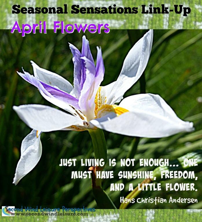 Seasonal Sensations Link-Up April Flowers