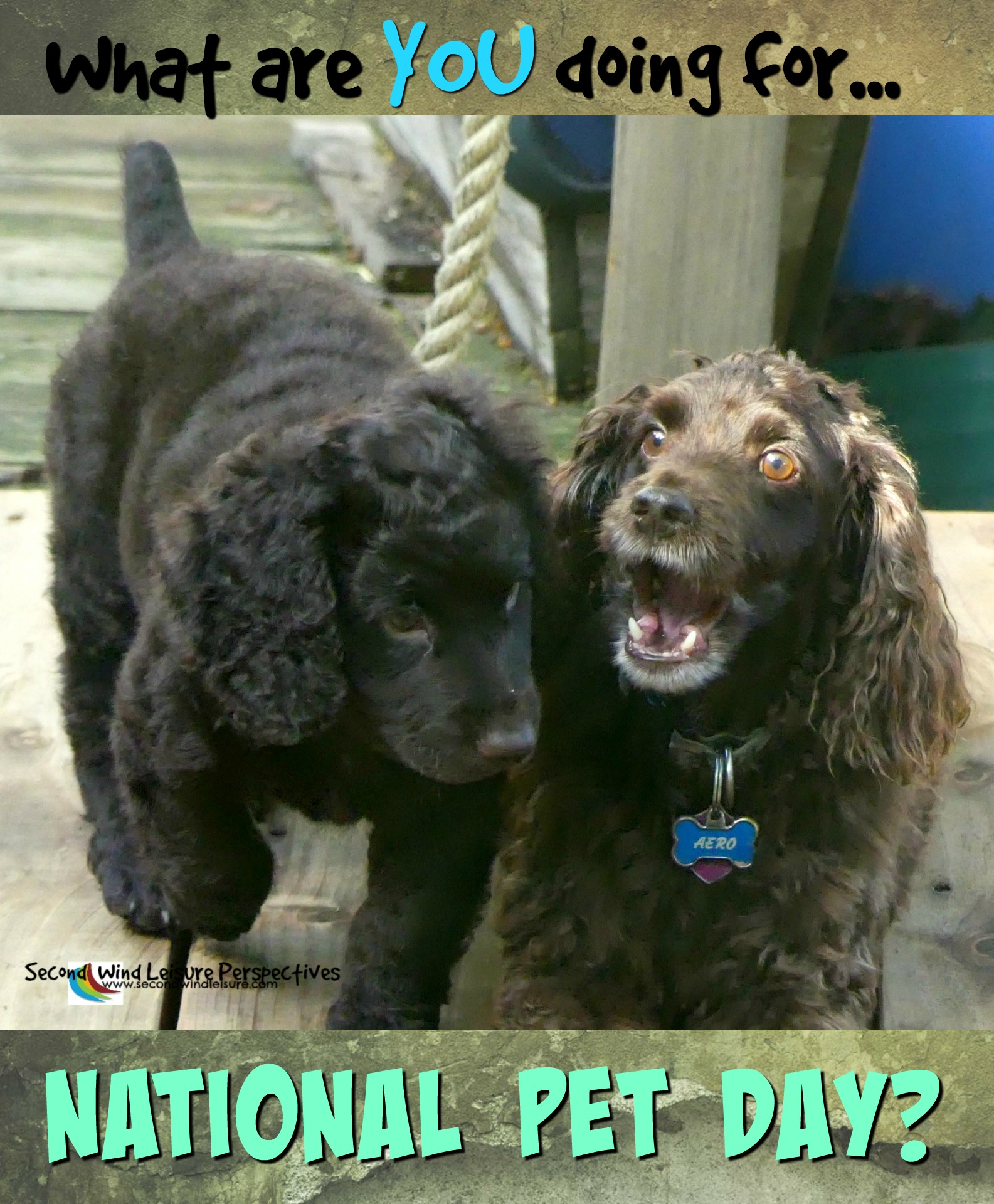 What are you doing for National Pet Day?