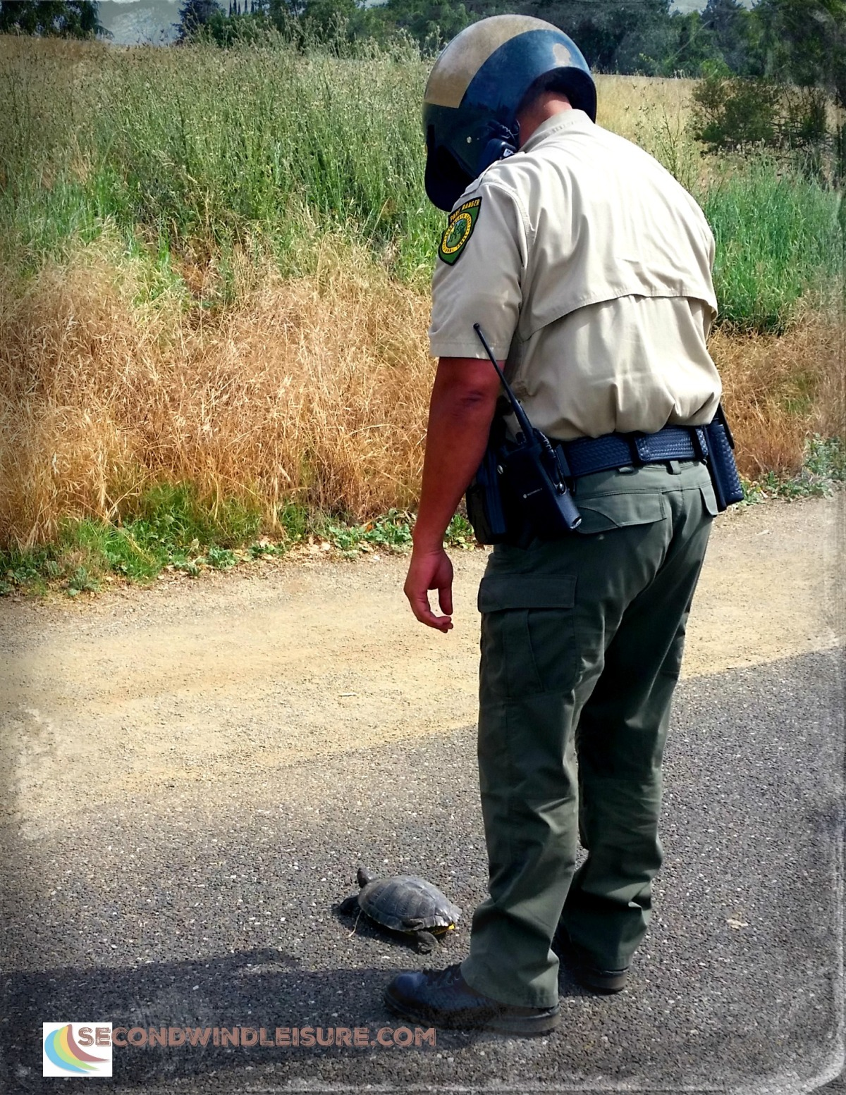 A Tortoise Crossed the Road