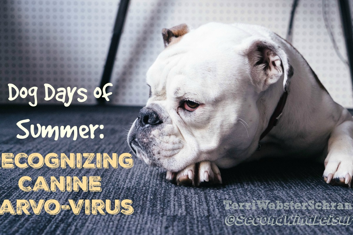 Recognizing canine parvo-virus in your dog