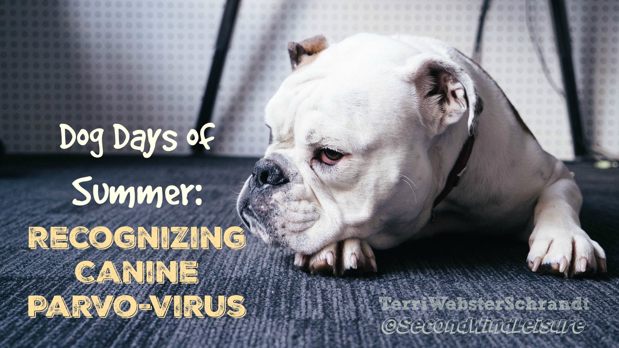 Recognizing canine parvo-virus in your dog