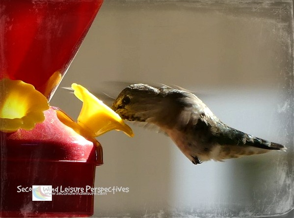Is a hummingbird really ever satisfied?