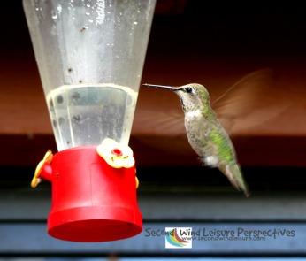 Sierra hummingbird