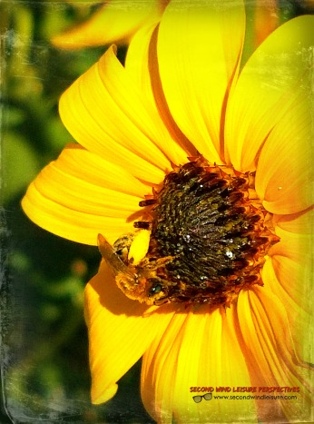 Bee & Sunflower