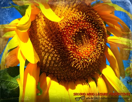 Sunflower and worm love a summer day