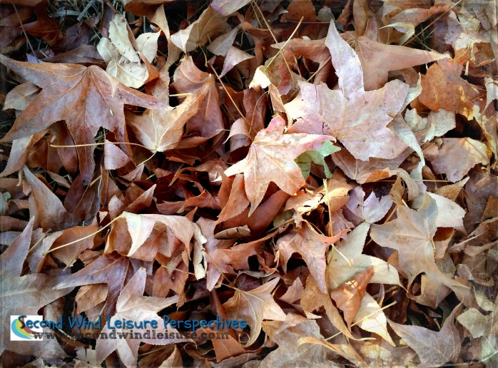 Layers of Fallen Autumn Leaves