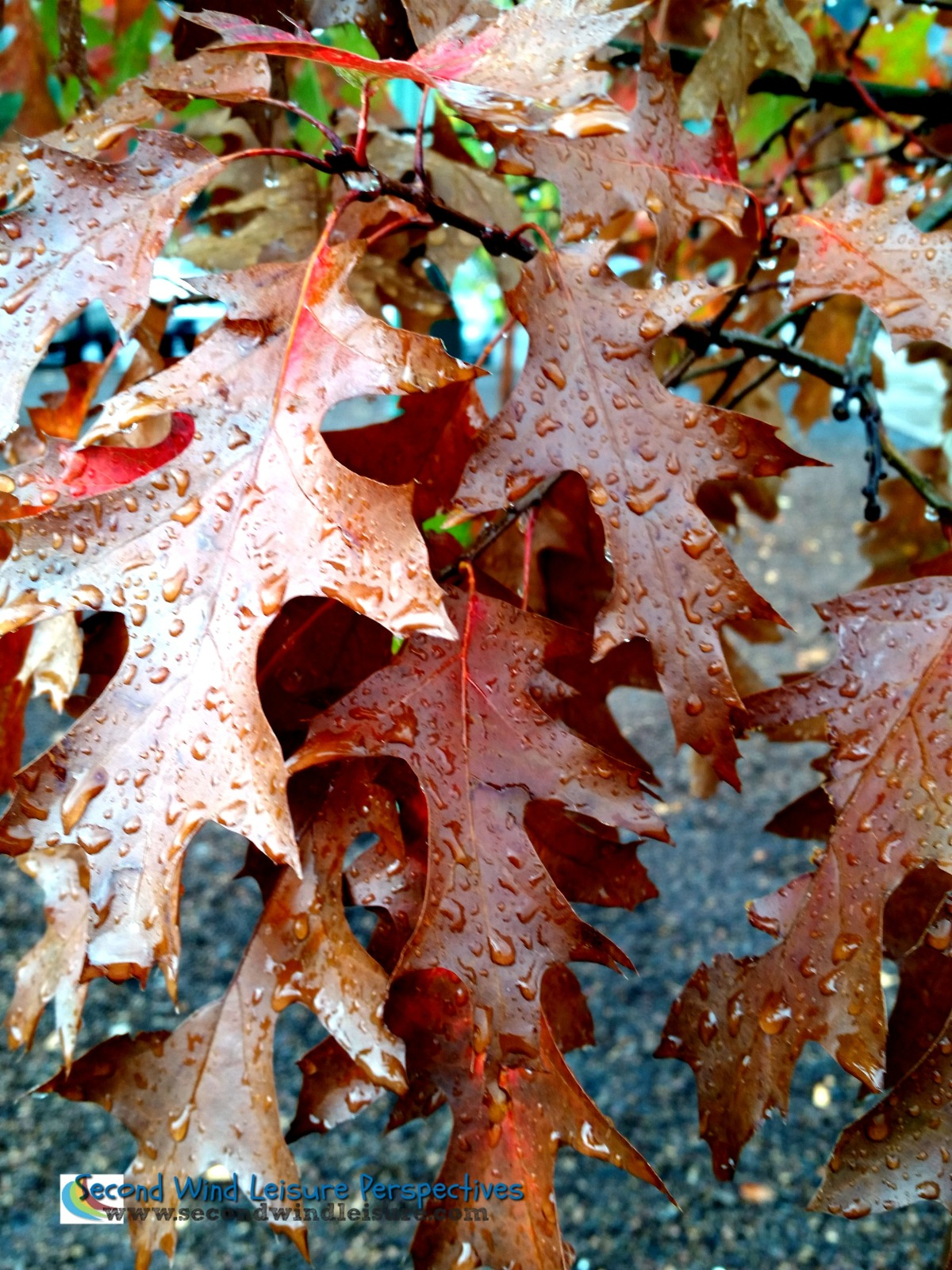 Layers of drops on layers of leaves