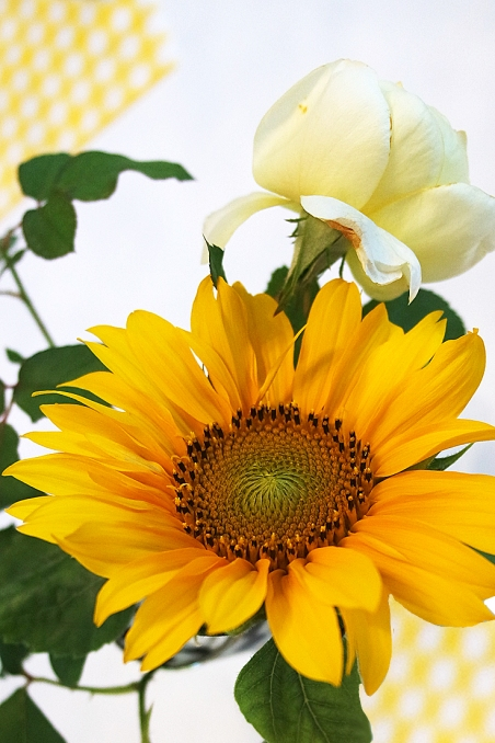 A sunflower a day, take the sadness away.