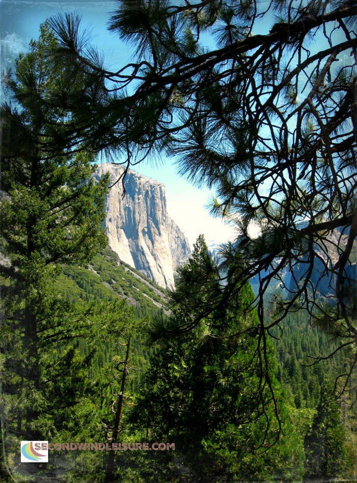 Pine Trees make a window onto the world of Yosemite Valley
